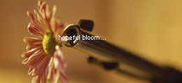 Picture Prompt: Hopeful Bloom