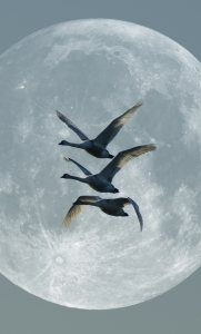 Picture Prompt: Moon Geese