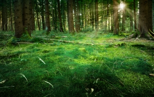 Picture Prompt: Fairytale Forest